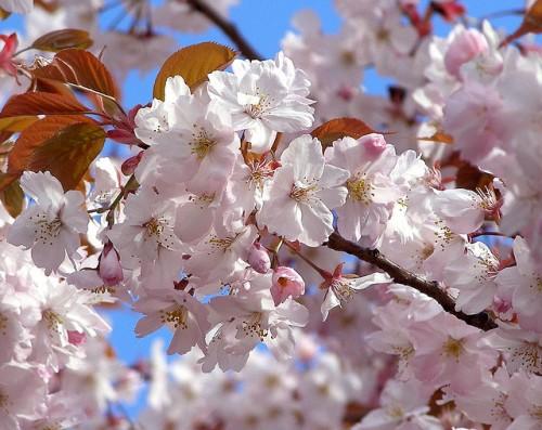 April-Flowers
